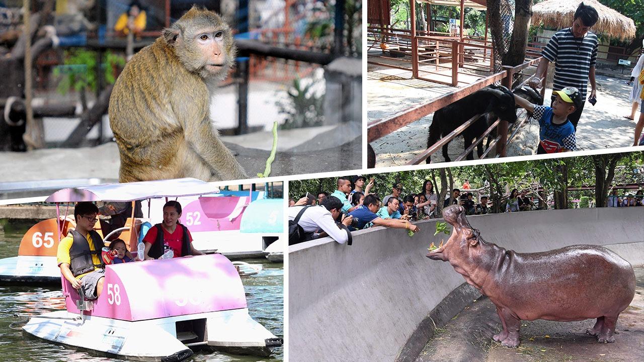 เที่ยวสวนสัตว์ย้อนวัยเด็ก